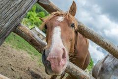 Cheval sur le ranch Images libres de droits