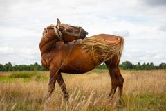 Cheval sur un pâturage d'été photos stock