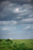 Cheval sur un pré vert contre le ciel Photos stock