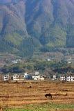Cheval sur un village de mt Photo stock