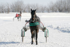 Cheval sur une neige blanche Image stock