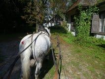 Cheval tirant un chariot Photo stock