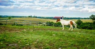Cheval ? une ferme au Kentucky image libre de droits
