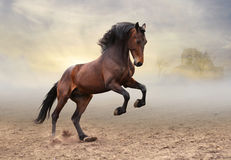Chevaleresk riddare royaltyfri fotografi
