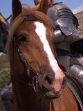 chevalier de cheval image stock