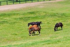 Chevaux à la ferme de cheval image stock