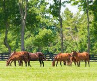 Chevaux à la ferme de cheval photographie stock libre de droits