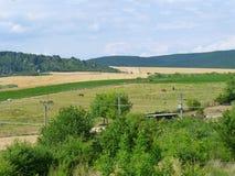 Chevaux à une ferme dans la campagne Image stock