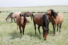 Chevaux Images stock