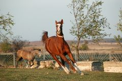 chevaux Photographie stock