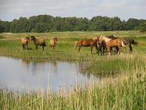 chevaux Photos libres de droits
