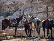 Chevaux attendant dans la ville perdue de PETRA, Photographie stock libre de droits