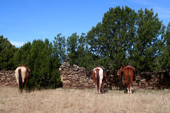 Chevaux attendant là des cowboys Photos libres de droits