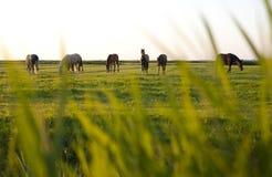 Chevaux au crépuscule Photographie stock libre de droits