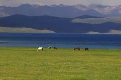 Chevaux au Kirghizistan près du lac Kol de chanson photos stock