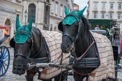 Chevaux avec des chapeaux verts et un fauteuil roulant Photo libre de droits