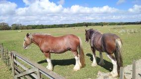 chevaux avec UGG photos stock
