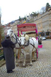 Chevaux blancs de Karlovy Vary Images stock