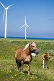 Chevaux d'énergie éolienne. Images stock