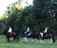 Chevaux d'équitation Photo stock