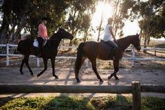 Chevaux d'équitation d'amis à la grange Photos stock