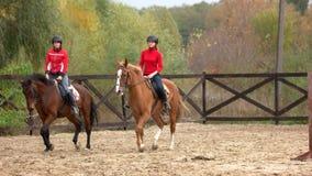 Chevaux d'équitation de jeunes femmes à la ferme banque de vidéos