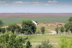 Chevaux dans des terres cultivables de corral Photographie stock libre de droits