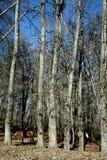 Chevaux dans la forêt Photos stock