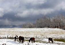 Chevaux dans la neige d'automne Photo stock