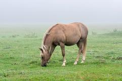 Chevaux dans le brouillard Photographie stock