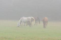 Chevaux dans le brouillard Images libres de droits