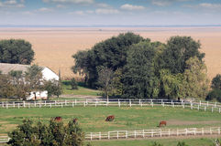 Chevaux dans le corral à la ferme Photographie stock