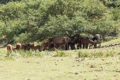 Chevaux dans le pâturage sur la nature Photo libre de droits