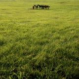 Chevaux dans le pâturage vert Photo libre de droits