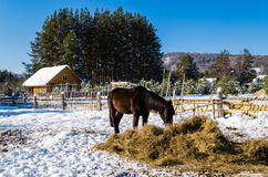 Chevaux dans le village dans les montagnes d'Ural Photo libre de droits