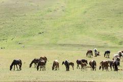 Chevaux dans les montagnes, équin, canassonnes, hoss, entaille, cheval de trait photographie stock