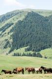 Chevaux dans les montagnes, équin, canassonnes, hoss, entaille, cheval de trait photo stock