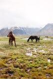 Chevaux dans les montagnes Image stock