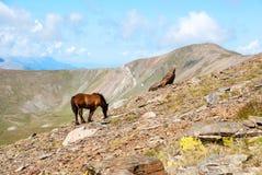 Chevaux dans les montagnes de Pyrénées, Espagne Photographie stock libre de droits