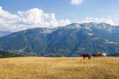 Chevaux dans montagnes photographie stock