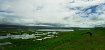 Chevaux dans un domaine, Islande du nord image libre de droits