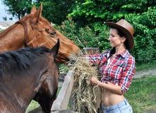 Chevaux de alimentation de jeune cow-girl attirante dans la ferme Images stock