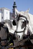 Chevaux de chariot à Salzbourg, Autriche Photo libre de droits