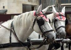 Chevaux de chariot Images libres de droits