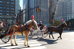 Chevaux de chariot de New York City Photo libre de droits