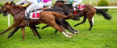 Chevaux de course avec des jockeys sur la maison directement Images libres de droits
