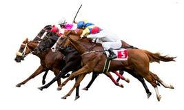 Chevaux de course avec des jockeys sur la maison directement Photo libre de droits