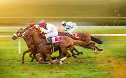 Chevaux de course avec des jockeys sur la maison directement Photographie stock libre de droits
