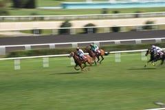 Chevaux de course dedans Image stock