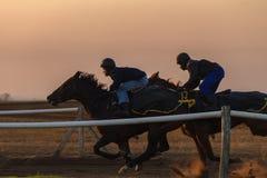 Chevaux de course formant l'aube Photo libre de droits